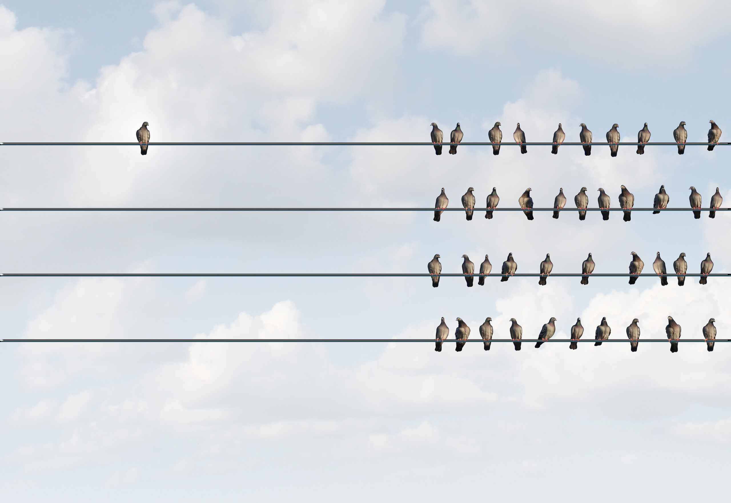 """Birds Grouped on Wires with One Bird by Itself """"Individuality"""""""