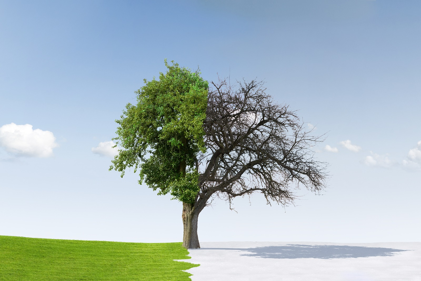 Tree split between summer and winter to illustrate change of seasons from winter to summer